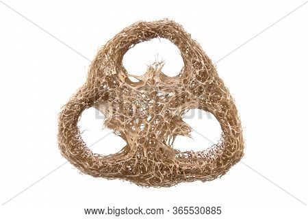 Loofah Sponge Close Up Isolated On White. Luffa Sponge, Fiber Scrubber, Cleansing Beauty Product. Th