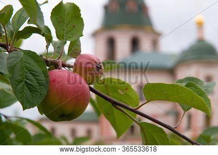 Apples In The Monastery Garden On The Background Of The Cathedral