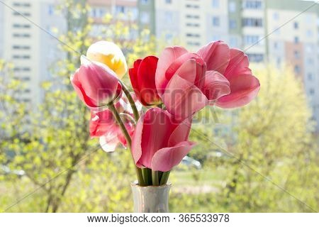 Yellow, Pink And Red Flowers Tulips Are In A Vase Near The Open Window, From Which You Can See The C