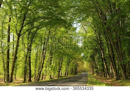 Country rural road spring oak trees forest path trail parkway Nature background deciduous Nature background woods green fresh lush tree Nature background Nature background Nature background tourism alley Nature background foliage leaves Nature background.