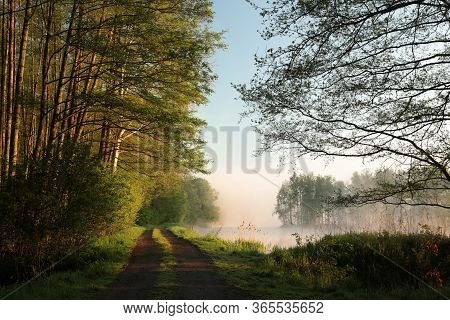 Trees foggy Nature lake landscape spring landscape Nature sunrise sunset Nature landscape Nature landscape Nature landscape Nature landscape Nature background Nature misty Nature background Nature landscape Nature background landscape Nature background.