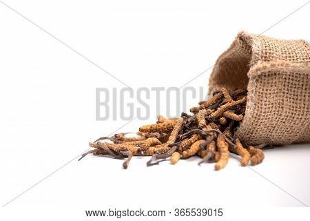 Closeup Of Ophiocordyceps Sinensis Or Mushroom Cordyceps In Brown Sack Bag On Isolated Background. M