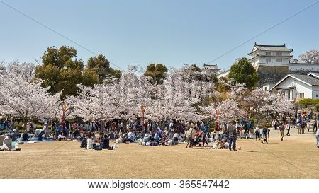 Himeji / Japan - March 31, 2018: People Picnicking Under Blooming Cherry Blossom Trees During The Sa