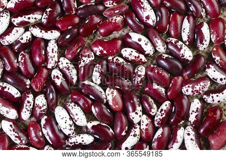 Bright Beans Close-up. Food Background. Background Texture Of Red Bean Grains. Top View On Spotted B