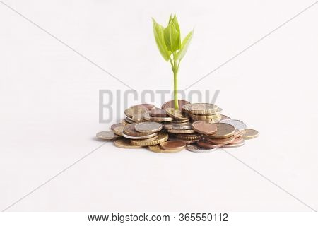 Green Sprout Sprouts From A Stack Of Coins On A White Background. Isolated. Invest Your Money To Ear