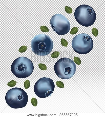 Set Of Blueberry With Leaves On Transparent Background. Fresh Blueberry Fruits Are Whole. Useful Rip