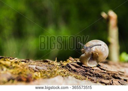 Little Snail On A Tree Branch Under The Sun