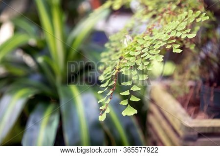 A Soft Focus Close-up Of Green Houseplants.