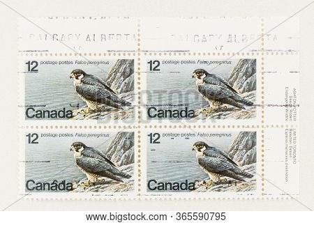 Seattle Washington - May 10, 2020:  Block Of 4 Stamps Featuring Peregrine Falcon, An Endangered Spec