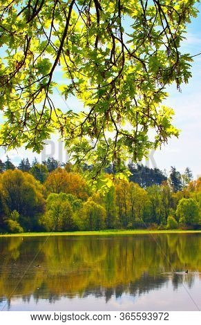 Sunny Leaves Of A Tree On A Background Of Blue Sky Near The Pond, Reflections On The Surface