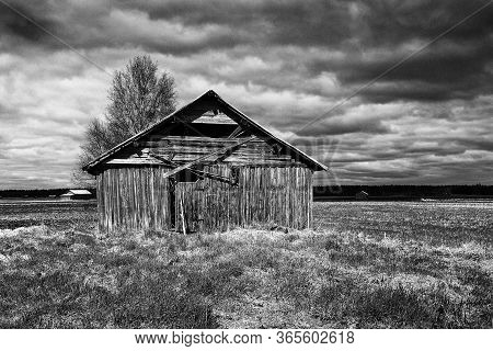 Wooden Barn Houses Stand On The Early Summer Fields Of The Rural Finland.
