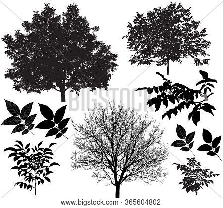 Collection Of Silhouettes Of Walnut Trees And Leaves