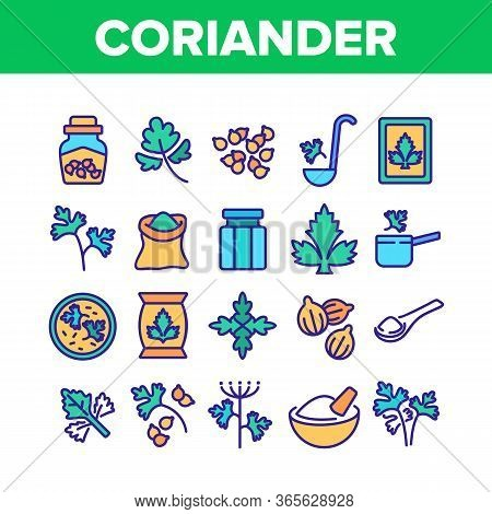 Coriander Herbal Plant Collection Icons Set Vector. Coriander Leaf And Seeds, In Bag And Bottle, On