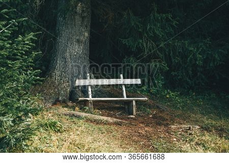 Close Up Of A Wooden Bench In The Forest For Leisure Travelers Or For Solitude.