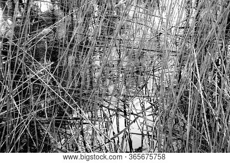 Dry Reed Reflection In Lake Water. Natural Background