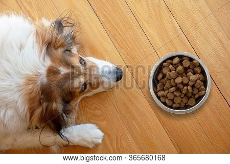Domestic Dog And A Bowl With Dry Food On Wooden Floor Background.