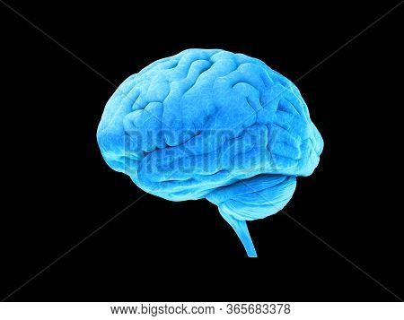 Blue Human Brain On Black Background, Human Anatomy