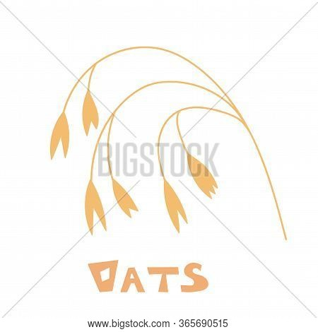 Hand Drawn Of Oats, Oatmeal, Oat Grain. Oat Spike Isolated On White Background