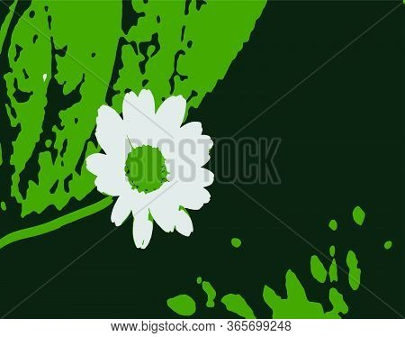 Close Up Spring Flowers On White Background