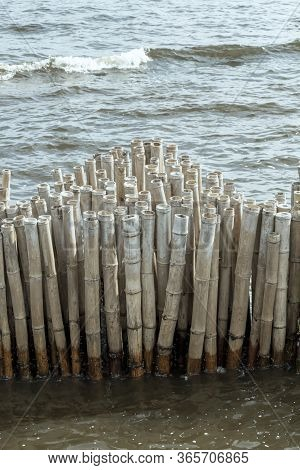 Bamboo Fence Wall Is Breakwater For Protecting The Shore And Mangrove Forest From Wave Erosion And S