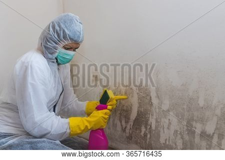 Close Up Of A Female Worker Of Cleaning Service Removes Mold From Wall Using Sponge And Spray Bottle