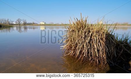 Tufts Of Grass In Shallow Water On The Banks Of The River Elbe Near Magdeburg In Germany. In The Bac