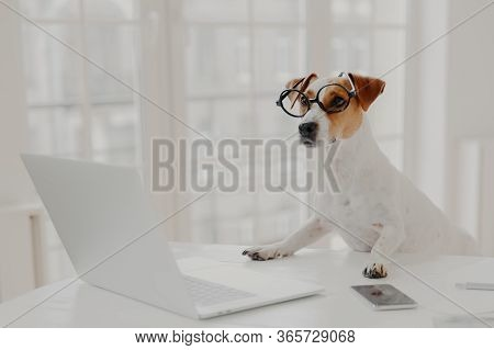 Photo Of Busy Pedigree Dog Wears Big Round Spectacles, Busy Working At Laptop Computer, Sits In Fron
