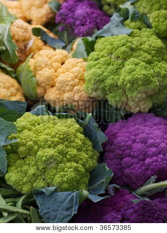 Pile of Purple Green Orange Cauliflower at the farmers market
