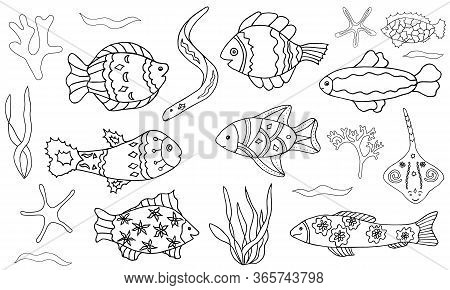 Vector Fish And Sea Set. Hand-drawn Contour Doodle Illustration On White Background Isolated. Orname
