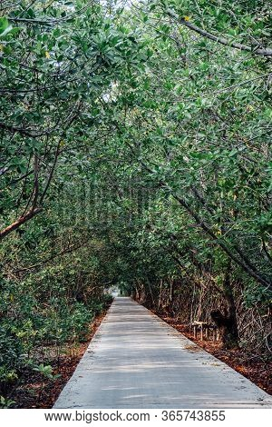 Calm And Beautiful Walking And Cycling Path In Flourishing Mangrove Forrest In Bangkok, Thailand