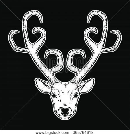 Beautiful Hand Drawn Tribal Style Deer Head. Magic Vintage Vector Illustration In White Over Black.
