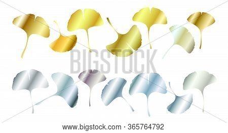 Ginkgo Or Gingko Biloba Golden And Silver Leaves Set. Nature Botanical Vector Illustration, Decorati