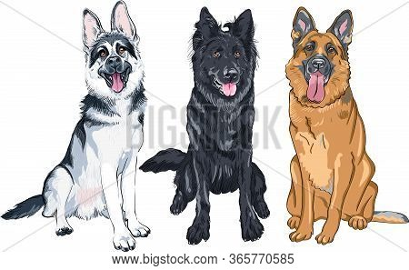 Vector Set Of Shepherd Dogs, East European Shepherd, Black Belgian Shepherd Dog Or Groenendael And G
