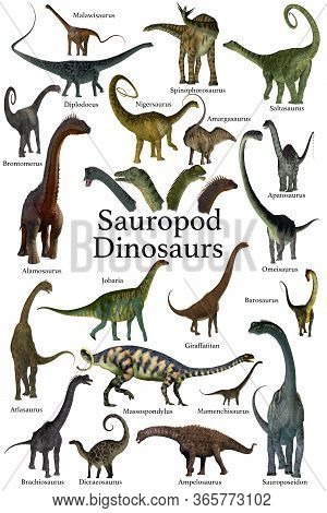 Sauropod Dinosaurs 3d Illustration - This Is A Collection Of Herbivorous Sauropod Dinosaurs Who Have