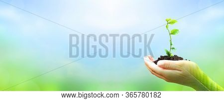 World Environment Day Concept: Hand Holding  Plant On Blur Green Nature Background