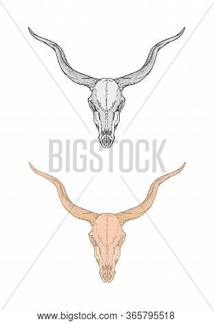 Vector Illustration With Hand Drawn Antelope Skull. Two Variants: Monochrome And Colored. In Realist
