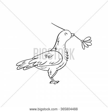 Сute Dove Holds Flower In Its Beak. Coloring Page For Adult And Kids In Zen Doodle Outline Style. Ve