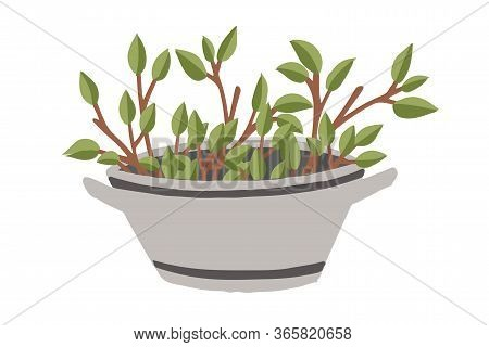 Metal Basin Branch With Leaves In Garden Basin With Dirt Creative Design Flat Vector Illustration Is