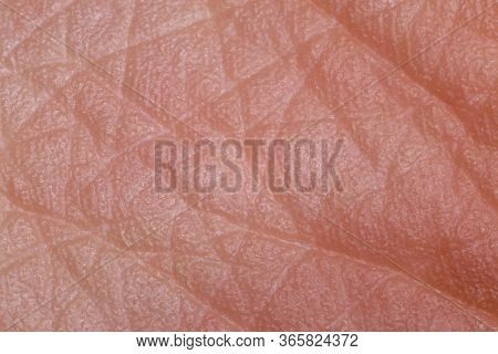 Texture Of Human Foot Skin. Dried Skin Spores. Extreme Close Up Macro Shot.