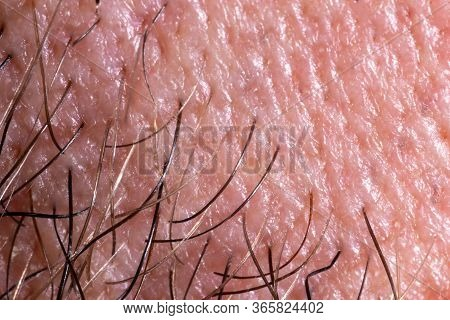 Human Skin Texture With Pores And Hair. Extreme Close-up Macro Shot