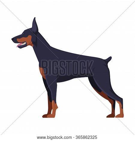 Doberman Purebred Dog, Pet Animal, Side View Vector Illustration