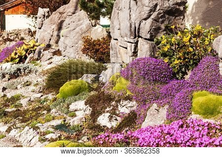 Artificially Created Rock Garden With Alpine Moss, Star Moss, Blue Cushion, Cushion Plant And Edelwe