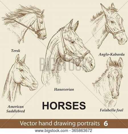 Hand Drawing Set Of Horses Breeds. Elegance Horse Head Isolated On Beige Background. Pencil, Ink Han