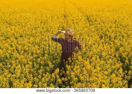 Oilseed Rape Farmer Looking Over Cultivated Field In Bloom, High Angle View Of Agronomist Standing I