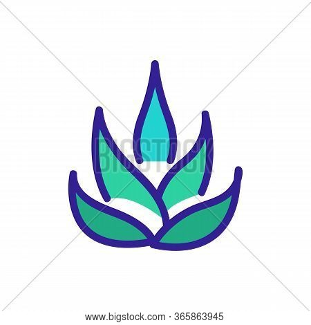 Agave Plant Icon Vector. Agave Plant Sign. Color Symbol Illustration