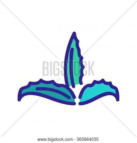 Cleansing Aloe Vera Icon Vector. Cleansing Aloe Vera Sign. Color Symbol Illustration