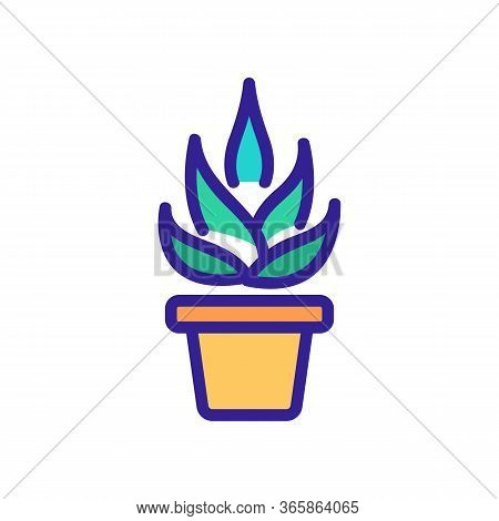 Agave In Home Pot Icon Vector. Agave In Home Pot Sign. Color Symbol Illustration