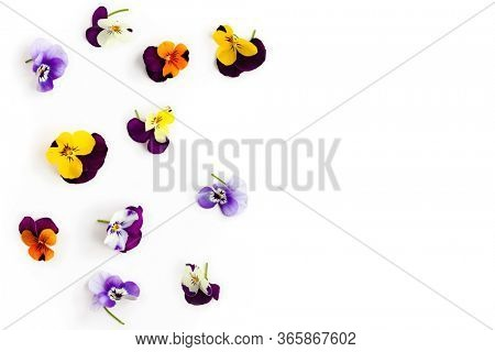 Spring or summer flower composition with pansy on white background. Flat lay, copy space. Edible flower concept.