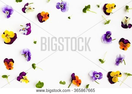 Spring or summer flower composition with edible pansy and micro greens on white background. Flat lay, copy space. Healthy life concept.