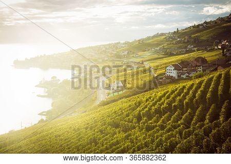 Lavaux, Switzerland: Lake Geneva And The Swiss Alps Landscape Seen From Lavaux Vineyard Tarraces Dur